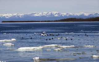 Животные озера Байкал