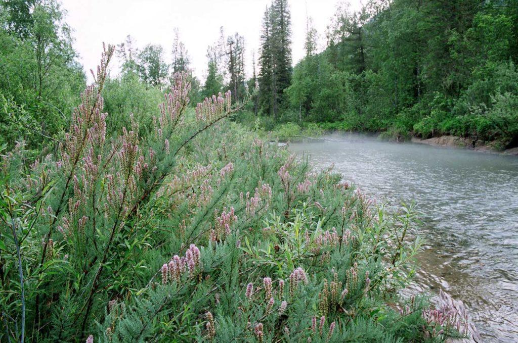 река Камга Алтай