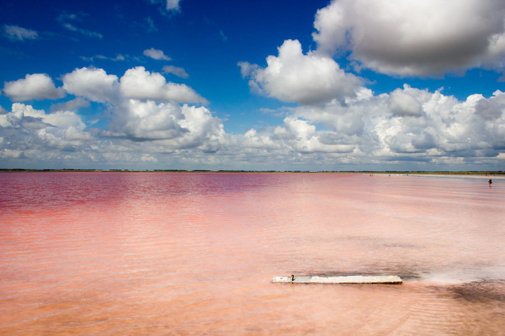 Розовое озеро Алтай