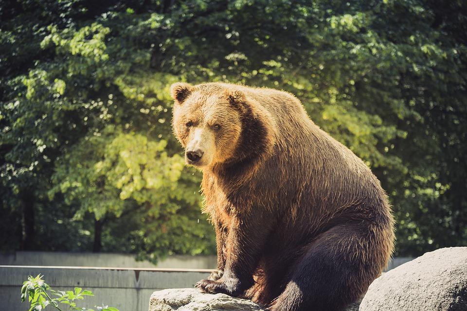 Охота на медведя Алтай