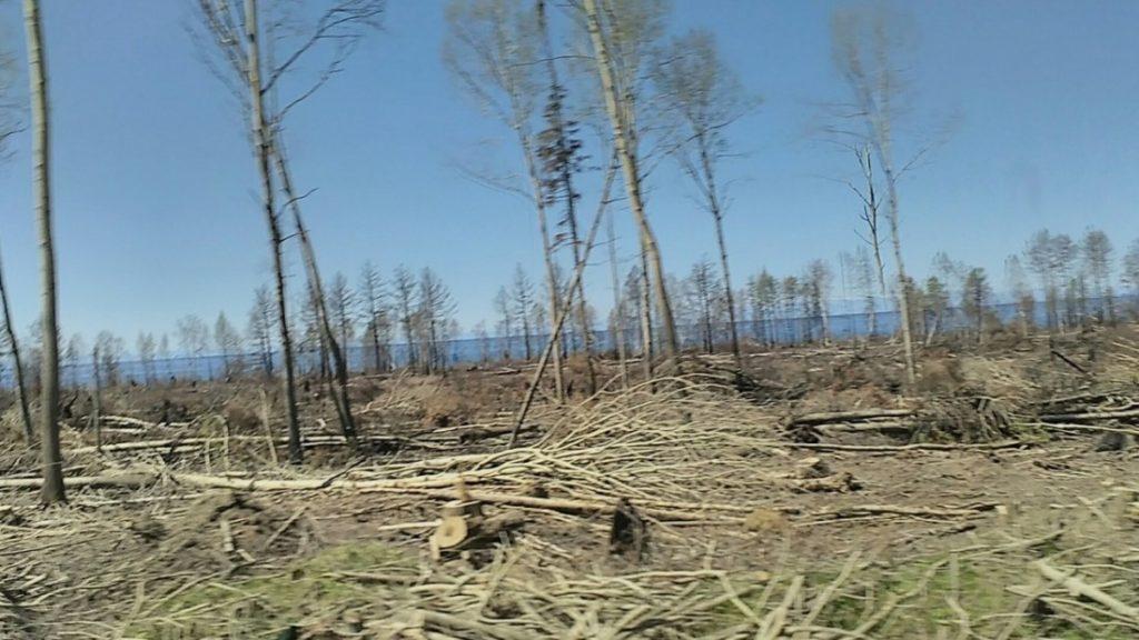 Рубка лесов на Байкале