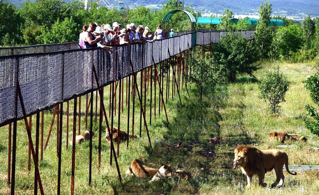 Львы Тайган