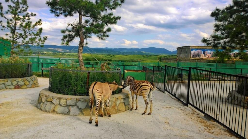 Зебры парк Тайган