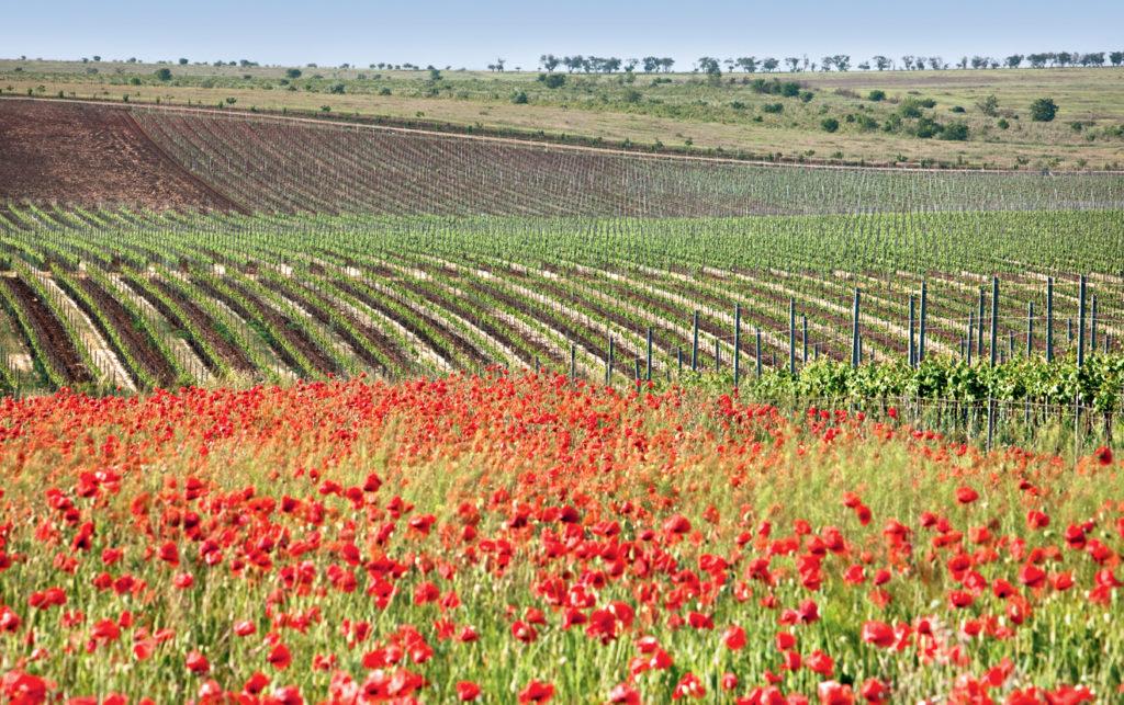 Сельское хозяйство Крым